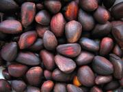 Кедровый орех оптом