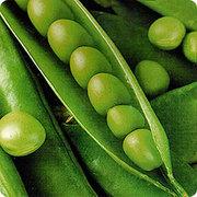 Семена гороха Аксайский усатый 7,  Усатый кормовой.